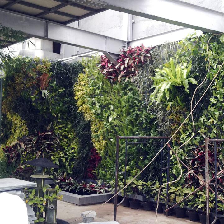 supplier-tanaman-hias-jakarta